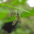 Malaria: waarop letten als toerist