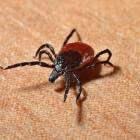 Lyme (borrelia) testen: welke en waar laten doen?