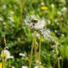 Desloratadine: medicijn tegen allergische reacties