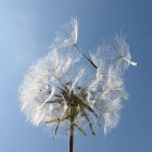 Hooikoorts een seizoengebonden allergie