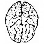 Gespleten brein: het scheiden van beide hersenhelften