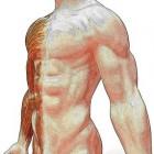 Sudeck dystrofie: overmatige pijn, zwelling na fysiek trauma