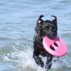 Hondenallergie: Symptomen door huidschilfers van hond