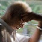 Is dementie te voorkomen?