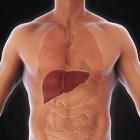 Vergrote lever: oorzaken en symptomen van leververgroting