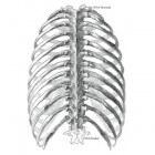 Pijn ribben: zere ribben, links en rechts - oorzaken ribpijn