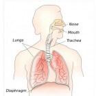 Problemen met ademhalen, oorzaken en het bestrijden