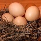 Intolerantie (allergie) voor ei