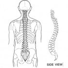 De oorzaken en gevolgen van (onder)rugpijn