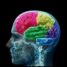 Executieve functies en ADD/ADHD