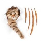Kattenkrabziekte: symptomen, oorzaak en behandeling