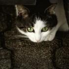 Allergie voor katten? Doe de zelftest