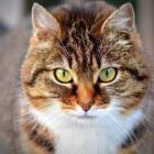 Allergisch voor katten: symptomen en remedies