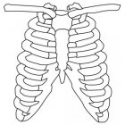 Wat te doen bij gekneusde ribben en borstbeen
