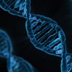 Factor V Leiden en erfelijkheid, heterozygoot of homozygoot