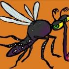 Zika-virus veroorzaakt zika-koorts: symptomen en behandeling