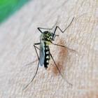 Malaria: Infectieziekte met koorts, geelzucht en zwakte