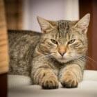 Kattenkrabziekte: Huidletsels en gezwollen lymfeklieren