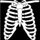 Ribpijn: Oorzaken van pijn aan ribben