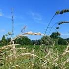 Code rood voor hooikoortspatiënten door graspollen