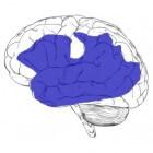 Afasie, een door hersenletsel veroorzaakte taalstoornis