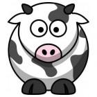 Helpt A2A2-melk bij een koemelkallergie?