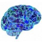 Brain fog (hersenmist), symptoom van de menopauze