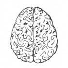 Hersenatrofie (cerebrale atrofie): Krimpen van hersenen