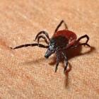 Ziekte van Lyme: symptomen, oorzaak, preventie & behandeling
