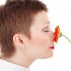Hyperosmie (verhoogde reukzin): Toegenomen reukvermogen