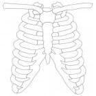 Pijn achter borstbeen: oorzaken, symptomen en behandeling