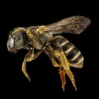 Allergische reactie op insectensteek: Symptomen & preventie