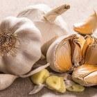 Knoflook: Voordelen rauwe teentjes knoflook voor gezondheid