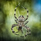 Spinnenbeet: symptomen, behandelen en verzachten spinnenbeet