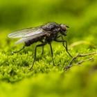 Vliegenbeten: Symptomen en behandeling van beet door vlieg
