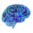 Hersenstamberoerte: Soorten, oorzaken en behandeling