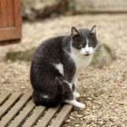 Ailurofobie: Irrationele en aanhoudende angst voor katten
