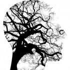 Schizofrenie (DSM-5): symptomen, oorzaak en behandeling