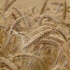 Glutenallergie: Symptomen, behandeling en glutenvrij dieet