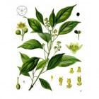 Aromatherapie praktisch samengevat