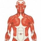 Hoe kun je spierpijn voorkomen en behandelen?