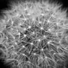 Galstenen en fytotherapie