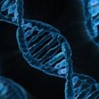 Niet af kunnen vallen door aanleg in je genen