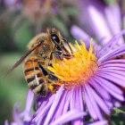 Bijensteek/wespensteek/hommelsteek: behandeling, wat te doen