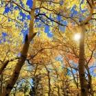 De herfstdip ... komt er weer aan