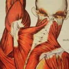 Triggerpoints, oorzaak van chronische pijn