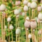 Homeopathie voor een betere nachtrust