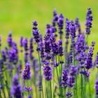Multiple Sclerose en Homeopathie