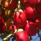 Rode palmolie: gezond voor huid en haar