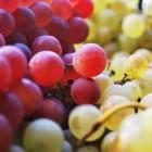 Reinig je lichaam met een druivenkuur
